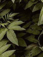 planta frondosa verde foto