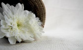 flor de crisântemo branco em uma cesta de madeira em um lençol branco