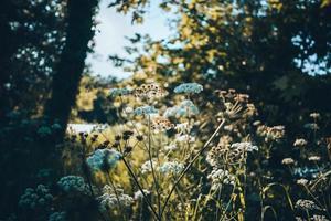 flores perto de um rio foto