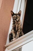 um gato marrom e preto em uma janela