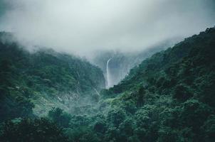 floresta verde exuberante com cachoeira