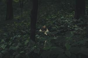 cão peludo curto branco e marrom foto