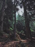 fotografia de bosques foto