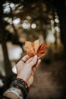 close-up de uma mão segurando uma folha foto