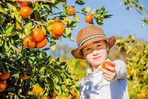 retrato de um menino atraente e bonito colhendo tangerinas em frutas cítricas