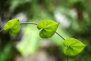closeup de folhas verdes