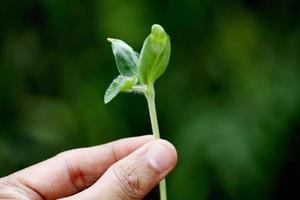 planta jovem nas mãos