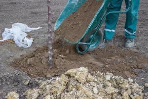 instale o solo superficial depois de plantar uma árvore foto