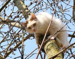 gato em um salgueiro foto