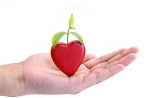planta verde crescendo do coração