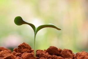 planta em crescimento