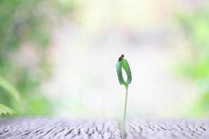 planta crescendo em mesa de madeira