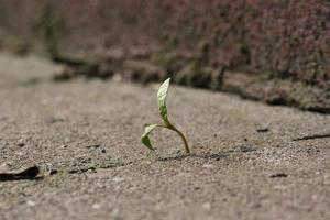 planta jovem cresce em beton foto