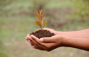 planta na palma da mão