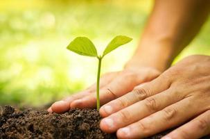 árvore em crescimento / ama a natureza
