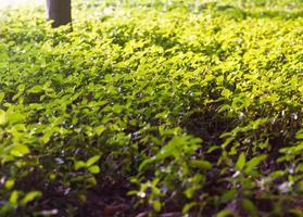 folha nas árvores