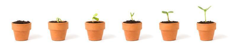 sequência de plantas em crescimento