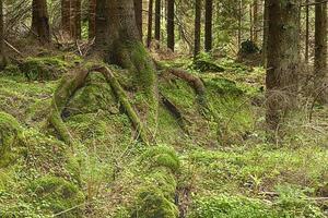 a floresta primitiva