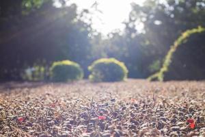 linda luz do sol espalhando-se nas plantas