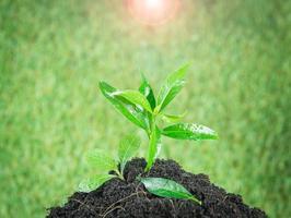 jovem planta verde nova vida
