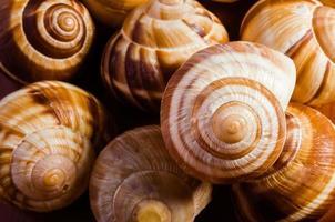 conchas de caracol