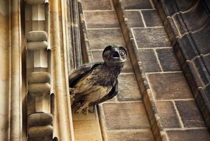 escultura de coruja na fachada