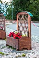 canteiro de flores foto