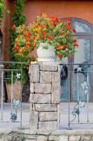 vasos de flores e plantas de casa na varanda