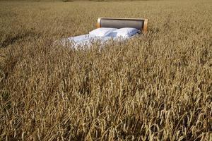 cama em um campo de grãos - conceito de bom sono foto