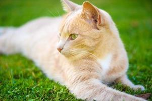 gato ruivo engraçado foto
