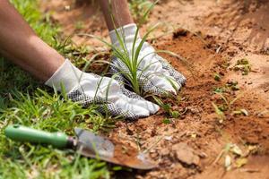 homem plantando