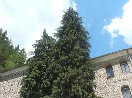 pinheiro na frente da fachada foto