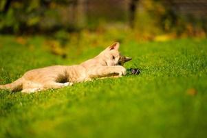gato engraçado na grama verde foto