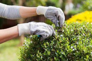 jardineiro aparando planta foto