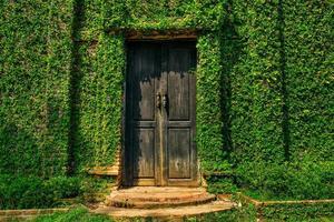 parede coberta com hera verde foto