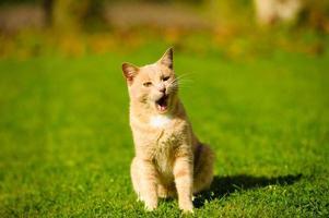 gato engraçado na grama verde
