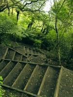 escadas na floresta