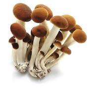 funghi chiodini foto