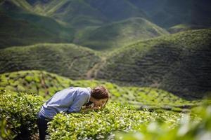 mulher cheirando folhas de chá