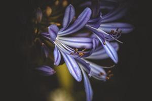 close up de flor roxa foto
