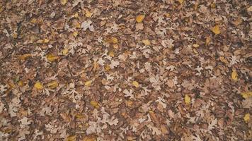 folhas de bordo no chão
