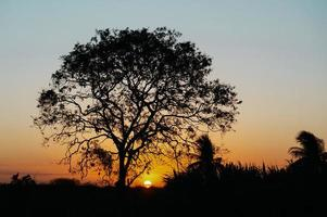 silhueta de árvore foto