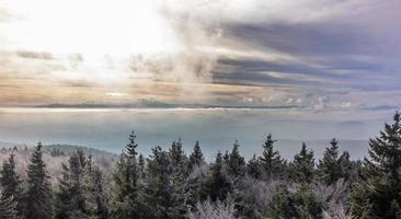 céu de inverno na floresta foto