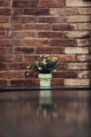 flor de áster branco em um vaso foto