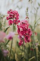 fotografia de flores com foco seletivo foto
