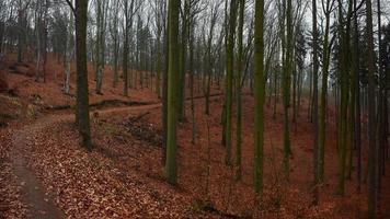 árvores e folhas de outono