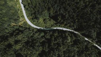 vista aérea de árvores verdes