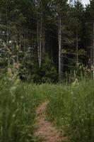 caminho cercado de grama verde
