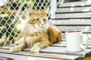 gato malhado ao ar livre