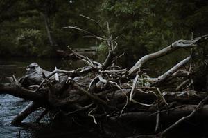 tronco de árvore morta em corpo d'água